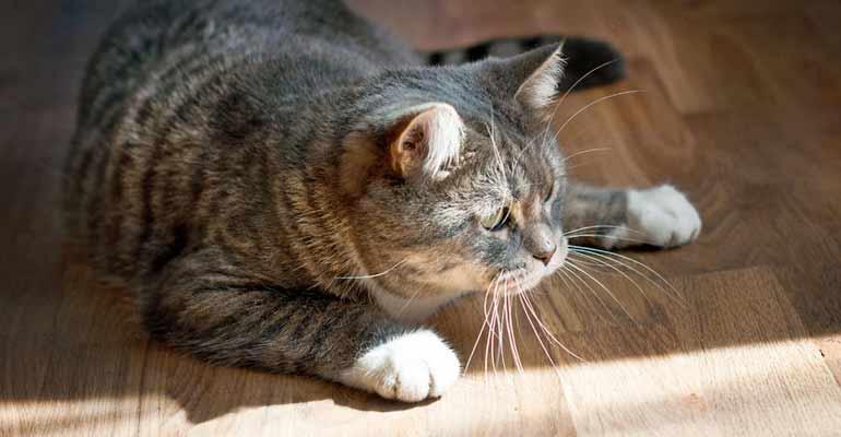 parquet resistente a arañazos de gatos
